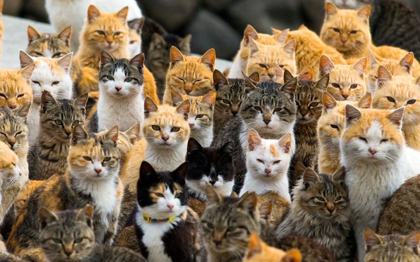 0a7efb7a5a8 Cats outnumber the human residents on Ainoshima Island: in fact, at any  given time there are only about 15-20 human residents on the island while  the cats ...