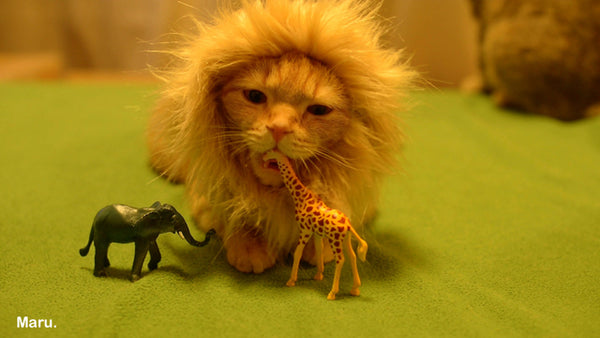Crown your cat King of the Jungle this Halloween with the Cat Lion Costume. Your cat will thank you. And possibly make you an Earl. & 12 Halloween Costumes You Absolutely Need For You and Your Cat ...