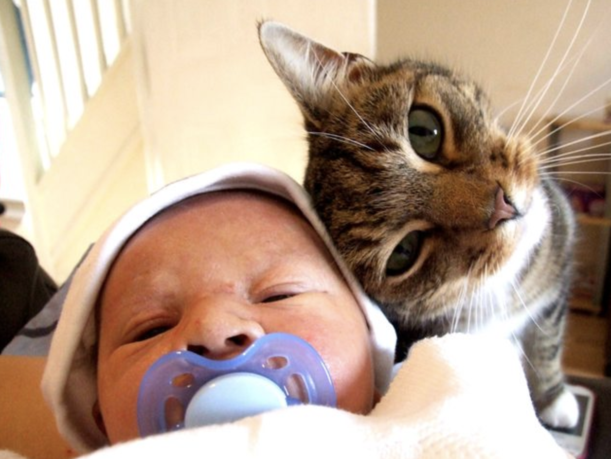 Literally Just 16 s of Cats Cuddling with Babies – Meowingtons