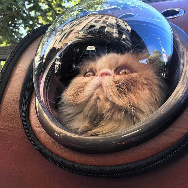 cat bubble backpack astronaut cat carrier space dome cat travel backpack cat backpack