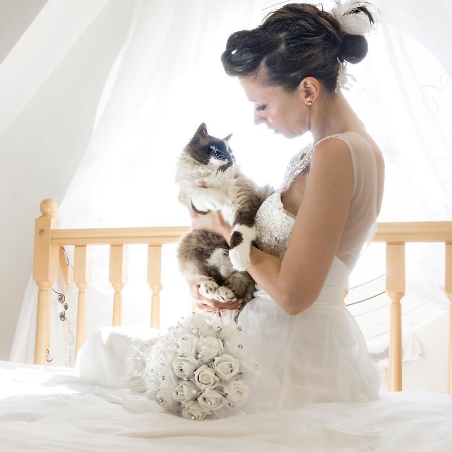 These Wedding Photos Featuring Cats Are Everything ...