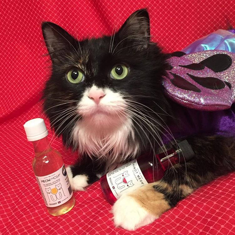 pinot meow cat wine meowmosa cat wine drink wine with your cat week