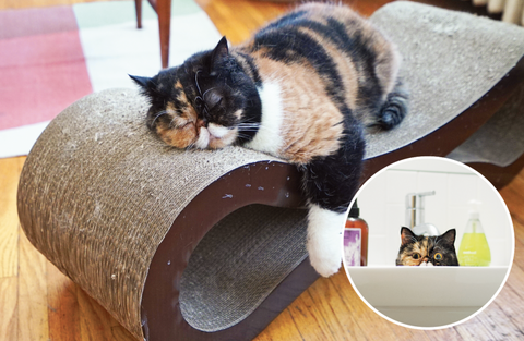 cat lounge scratcher for cats