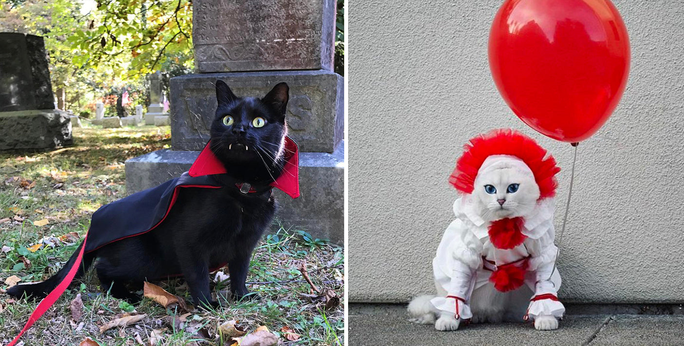 Image result for halloween kitties