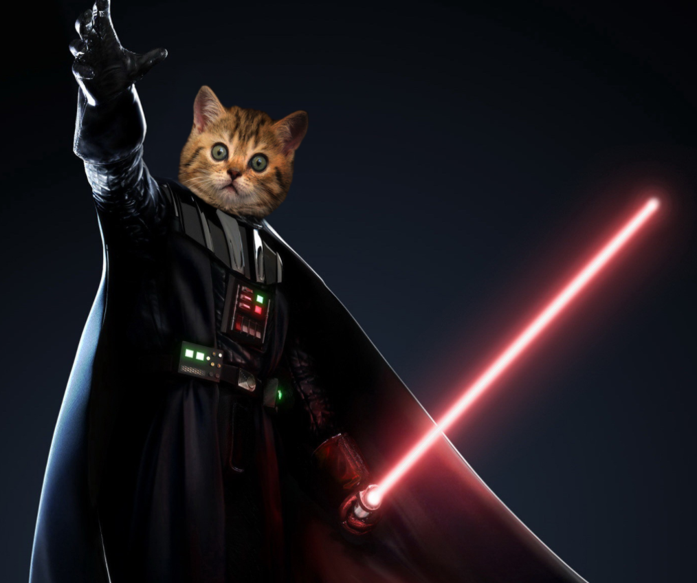 10 cats who have turned to the dark side revenge of the