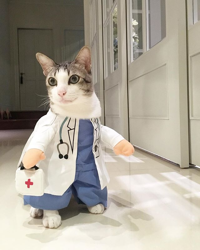 Halloween Doctor Cat Costume
