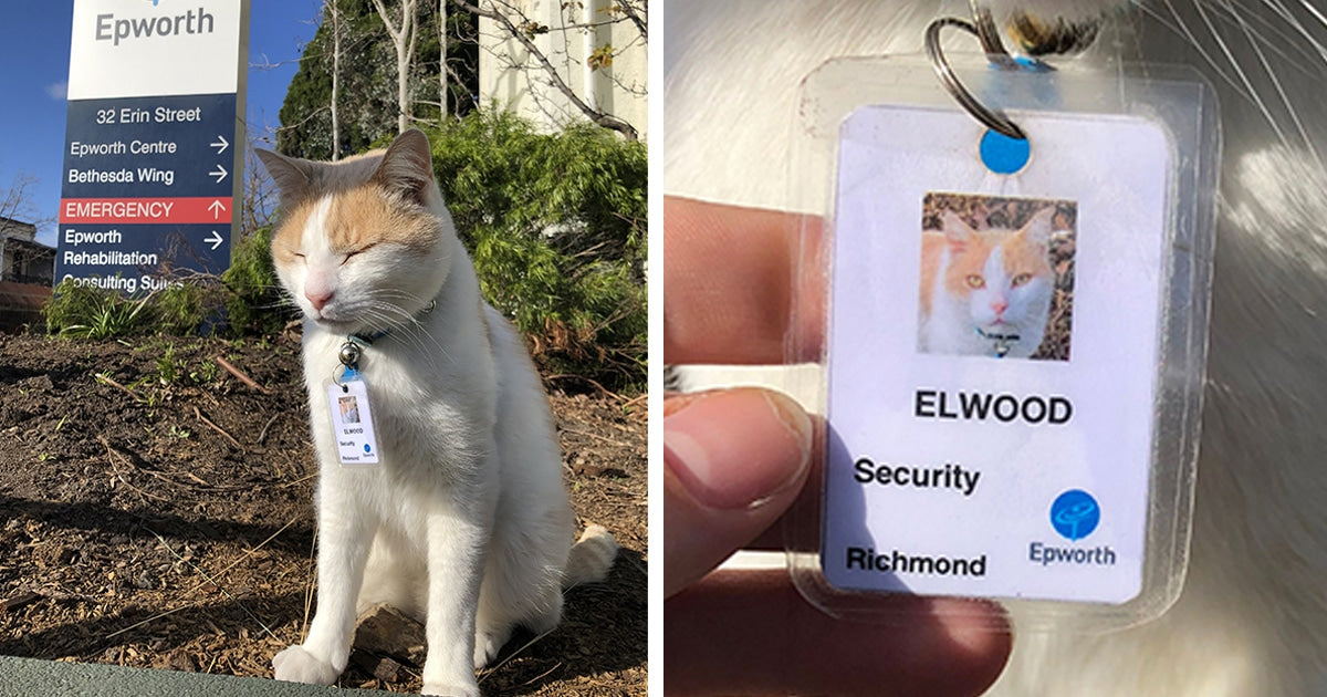 15 Very Purrfessional Cats With Very Important Jobs