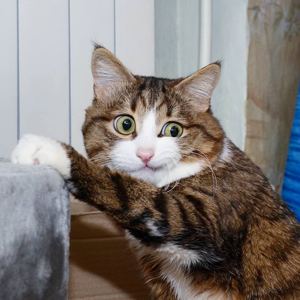 There Are 5 Feline Personality Types - Which Is Your Cat? – Meowingtons