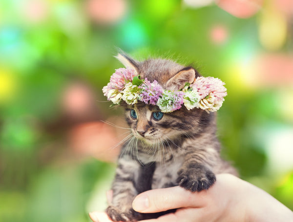 flower crown cat