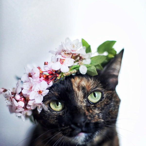 flower crown spring cat