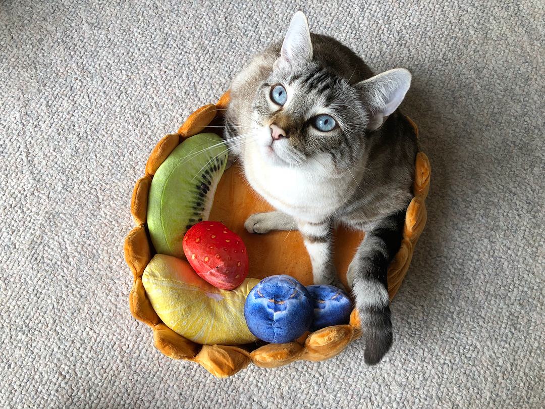cat tart bed cute cat bed