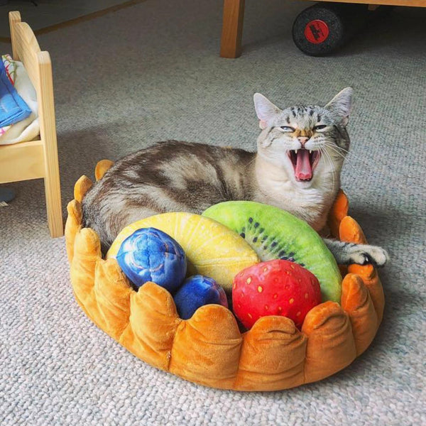 12 Purrfect Birthday Gift Ideas For Your Cat Obsessed Friend Meowingtons