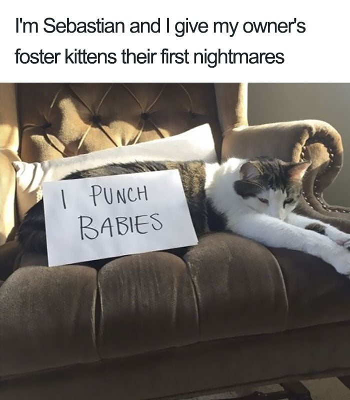 fe35a4a9 20 Rude AF Cats Being Shamed For Their Kitty Crimes – Meowingtons