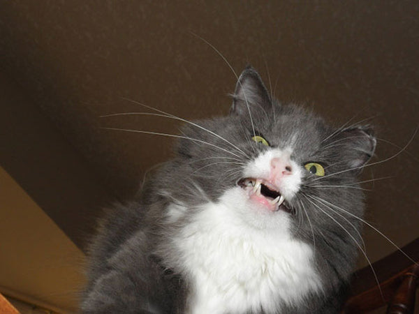 Literally Just Hilarious Photos Of Cats Caught MidSneeze - Hilarious photographs faces pulled sneezing dogs cats