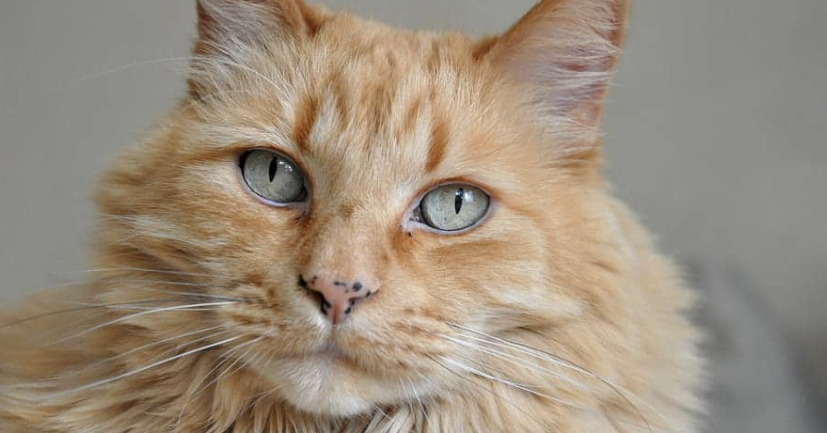 Did You Know Cats Can Get Freckles?