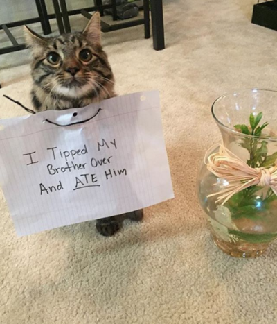 cat shaming photos