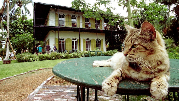 How Many Cats Did Hemingway Have