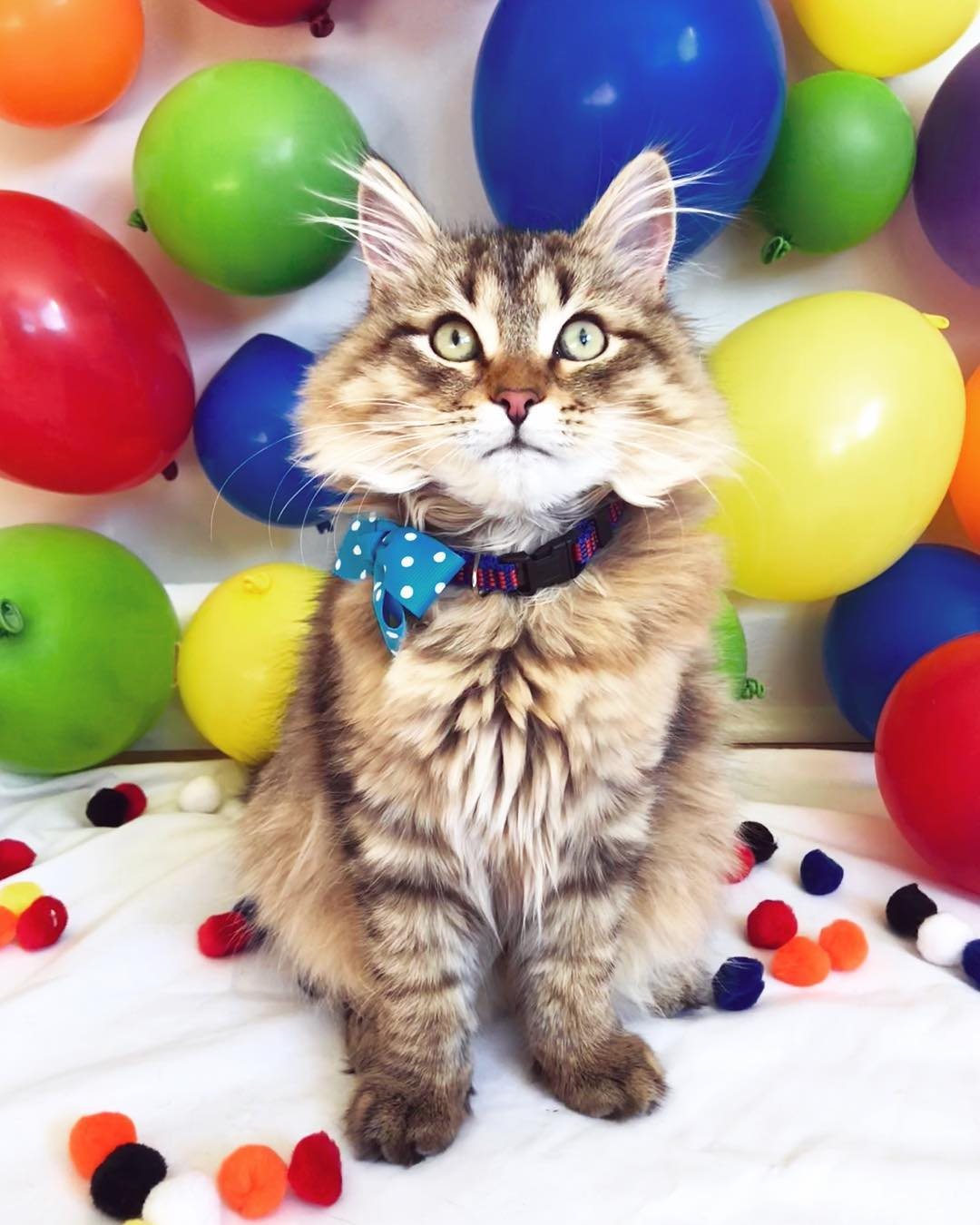 For those folks who ve got a cat with a taste for the fancy, the Polka Dot  Bow Tie Collar is purrfect present for a tailored tabby - and purrfect for  any ... 0b1afea37d