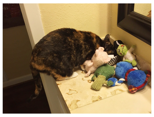 Sneaky Hoarder Cats Caught RedPawed With Their Stashes Meowingtons - Sneaky cat got caught