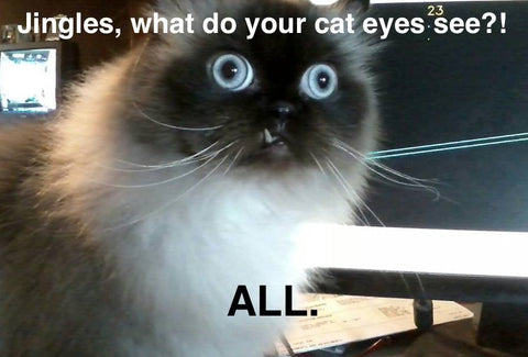 What is My Cat Trying to Tell Me? – Meowingtons
