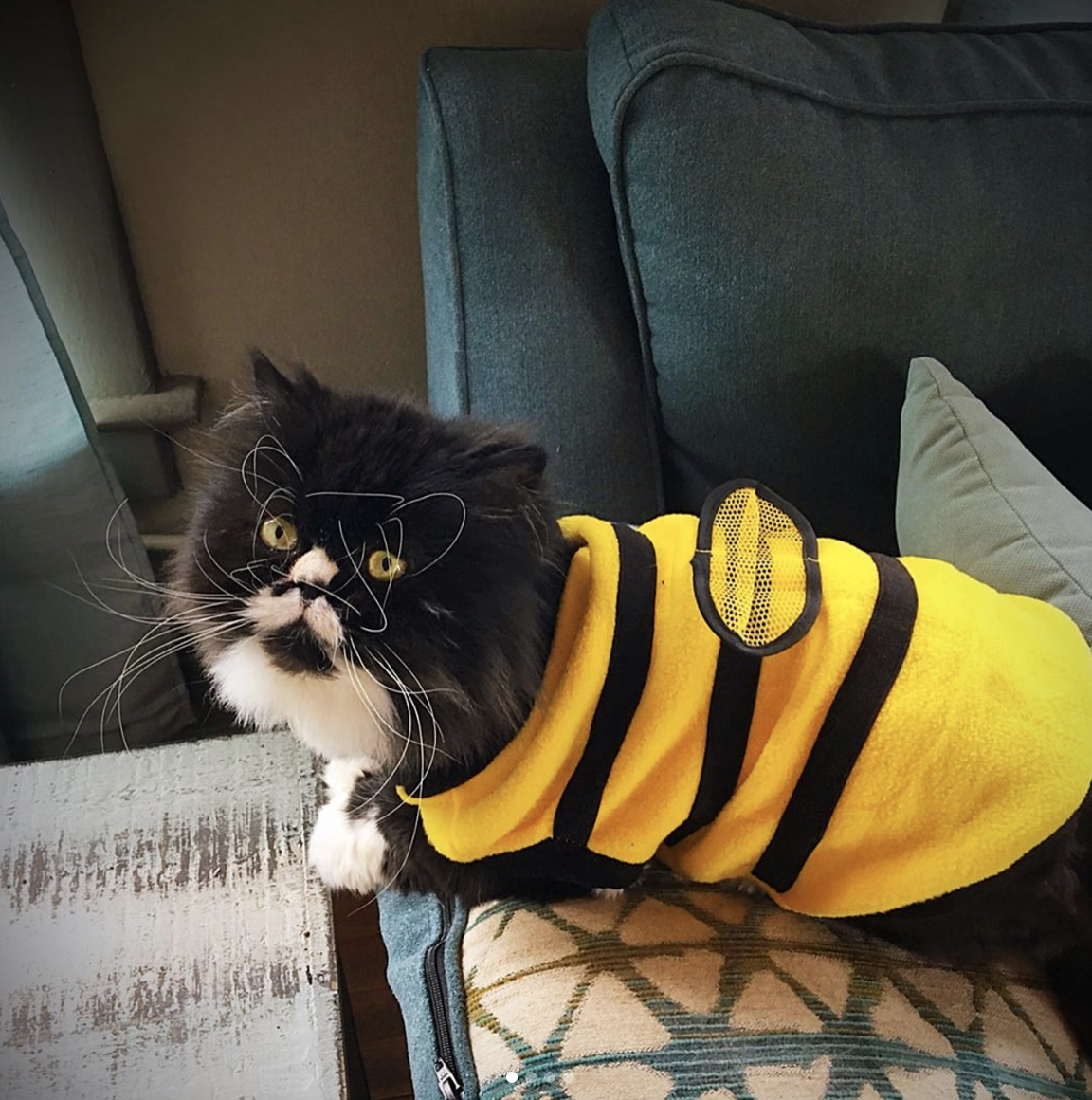 bumblebee cat costume bee cat outfit