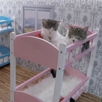 sleeping kittens beds for cats cat beds