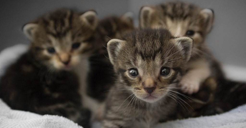 What Is 'Kitten Season', And How Can You Help?