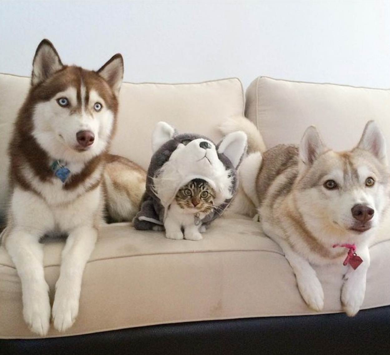 They Literally Dress Up As A Dog