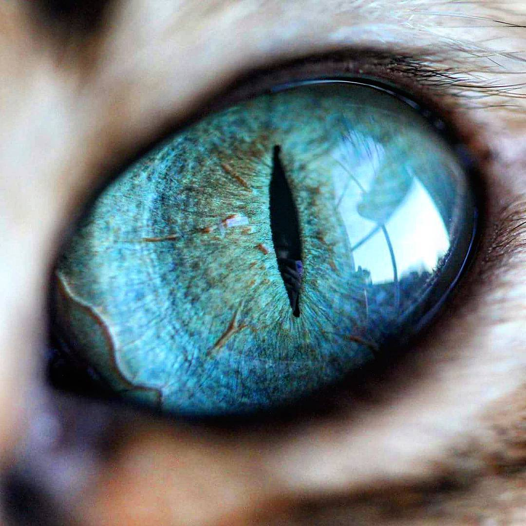 can animals see spirits