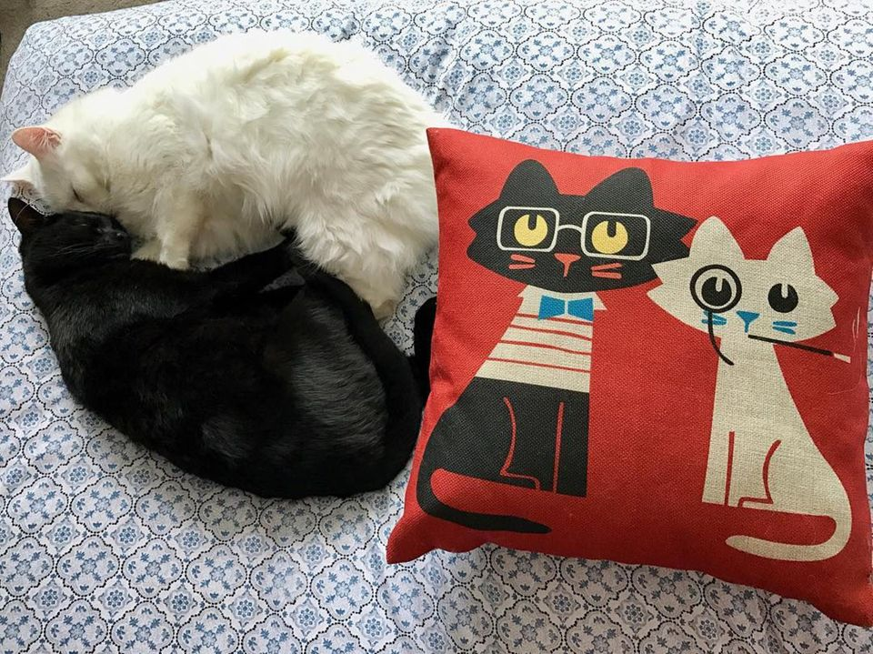 Meowingtons Cat Pillow