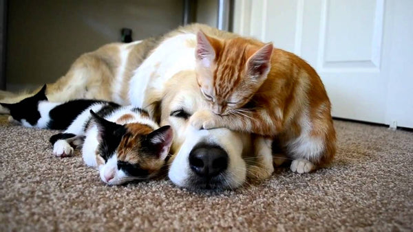 guard dog dog and kittens