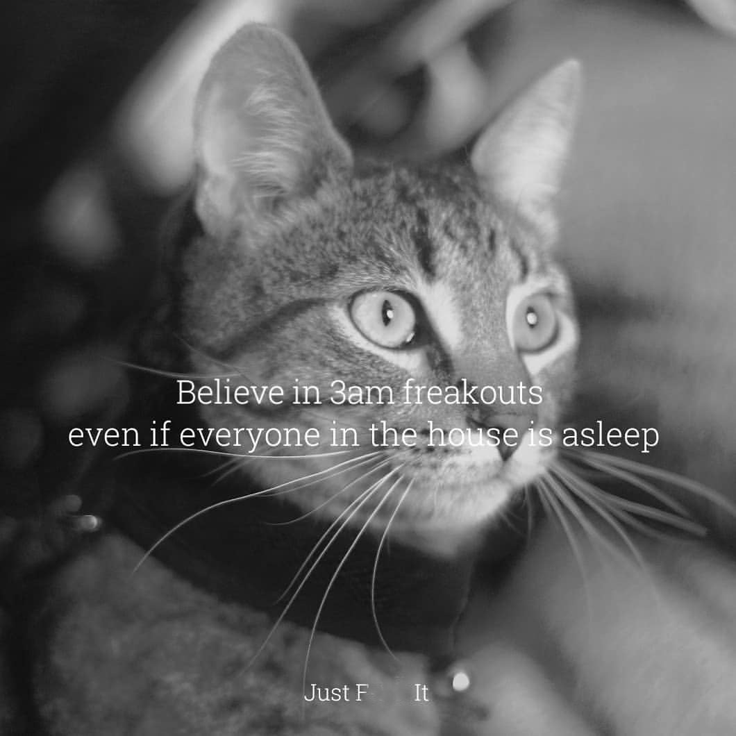 believe in something cat meme
