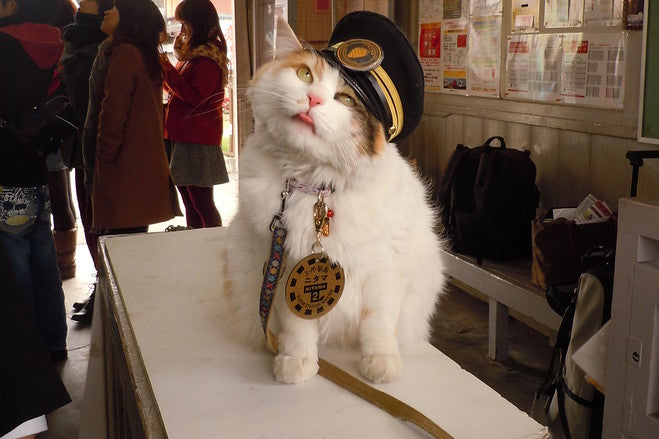 stationmaster nitama nitama the cat internet cat memes funny cats cat costumes meowingtons