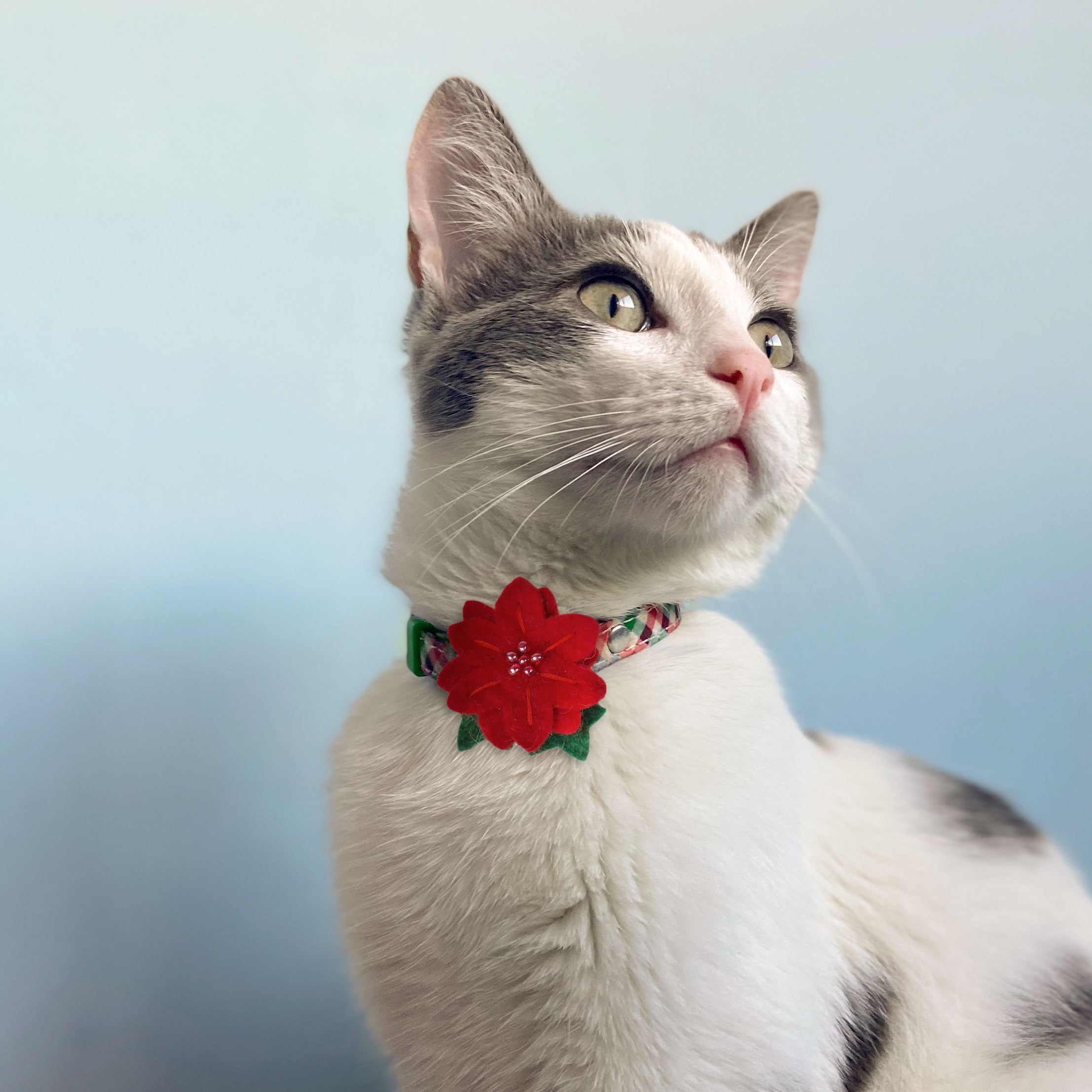 Holiday Poinsettia Flower Cat Collar Accessory