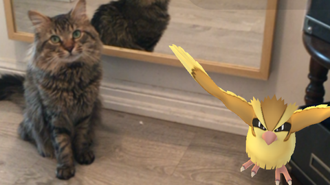 Meowingtons Pokemongo Cats who play