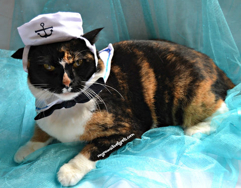 sailor cat