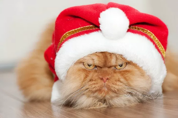 https://cdn.shopify.com/s/files/1/0344/6469/files/santa_cat_hat_grande.png?v=1511986050