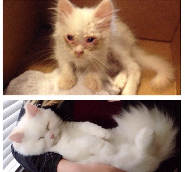Before And After Photos Of Rescued Cats Shows What Love Can Do - 27 amazing transformations of dogs and cats before after adoption