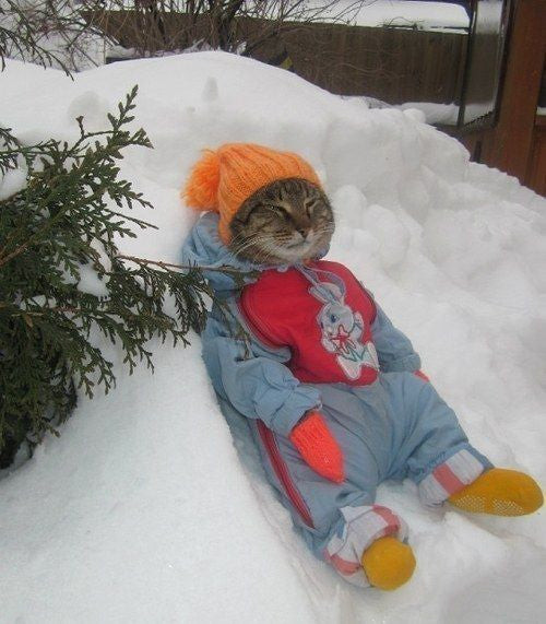 cat snowsuit cat bundled up