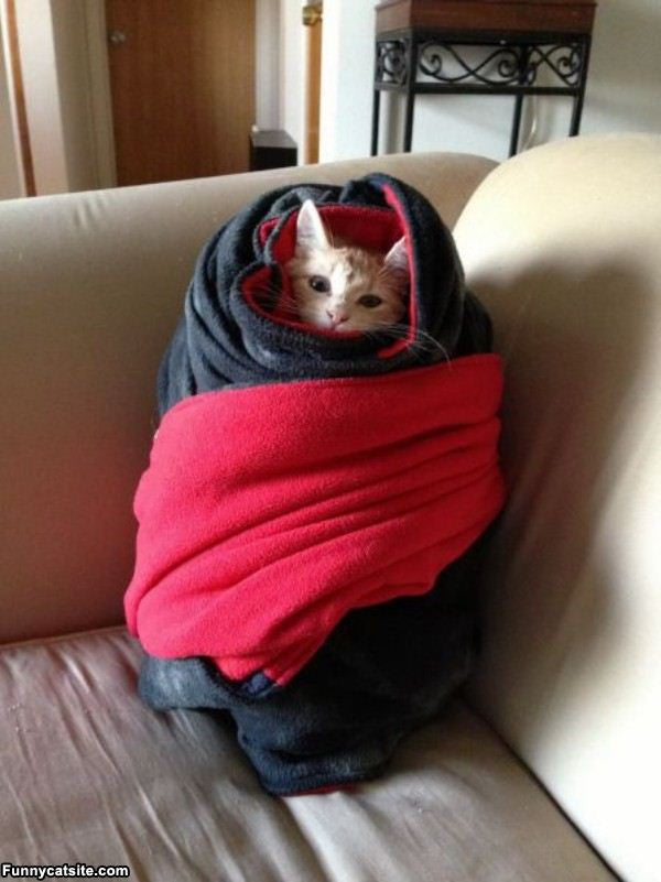 purrito cats bundled up