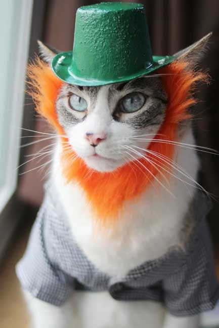 leprechaun cats costumes for cats outfits for cats