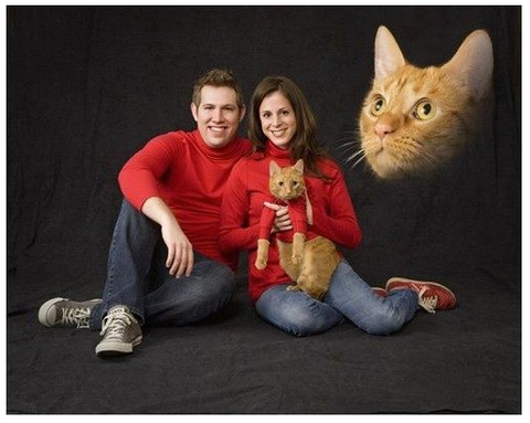ugly christmas sweater valentines day cat gifts