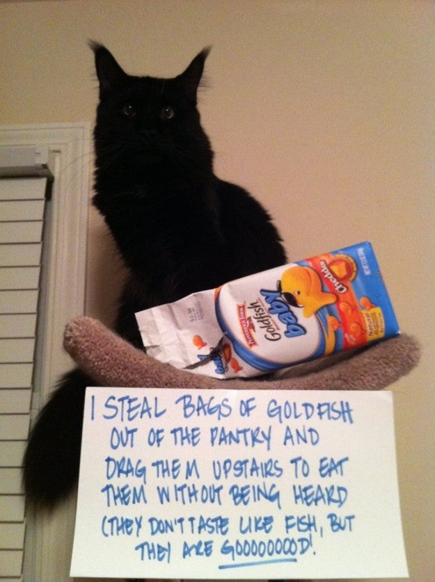 pet shaming pictures