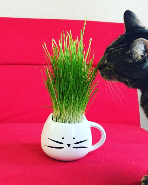 tom cat mug cat grass
