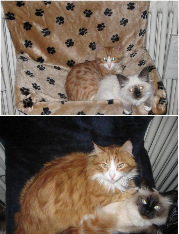then and now cat photos