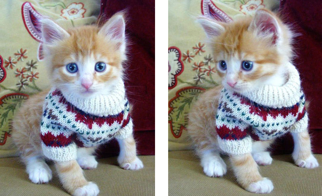 Kitten Christmas Sweater.Literally Just 10 Festive Photos Of Cats In Tiny Christmas