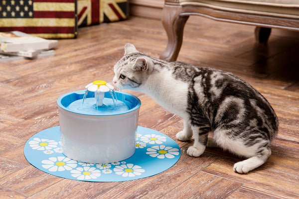 Cat Won T Drink From Fountain