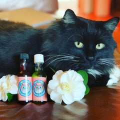 Catnip-Infused MosCATo Cat Wine