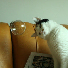 Cats and Bubbles from Meowingtons