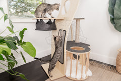 multiple cats amazingly playing in cat tree furniture